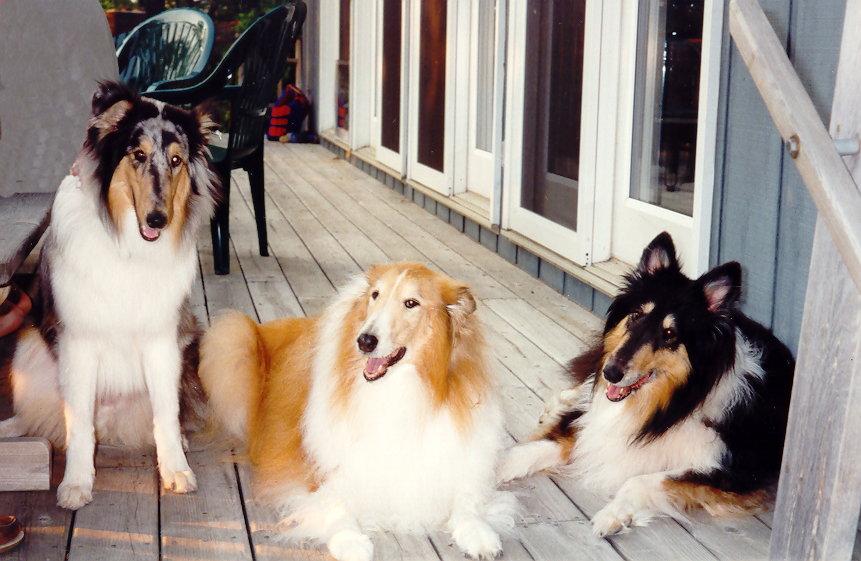 Die richtige Fellpflege für jede Hunderasse 2